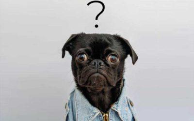 🚫 🐶 ¿Me pueden prohibir tener un perro en mi propia casa? ¡Escribe tu opinión!